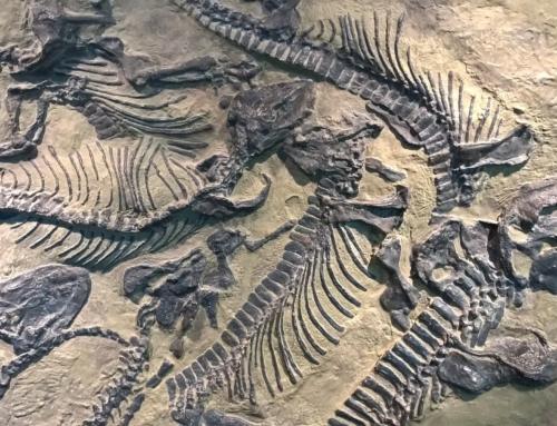 Noah og syndefloden – Fossilene
